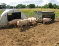 Pink Pig Farm (approx. 25 miles)